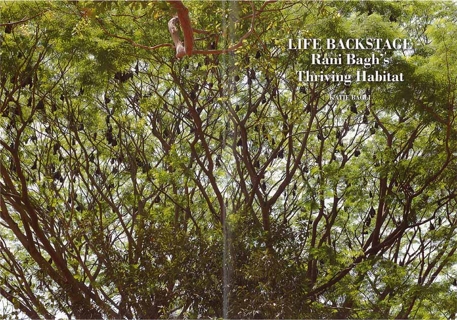 Rani Bagh 150 Years, Chapter III double-spread